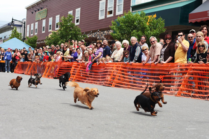 Weiner dog races at Sam Steele Days